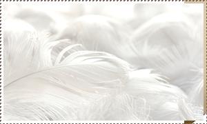 羽毛ふとんの リフォーム