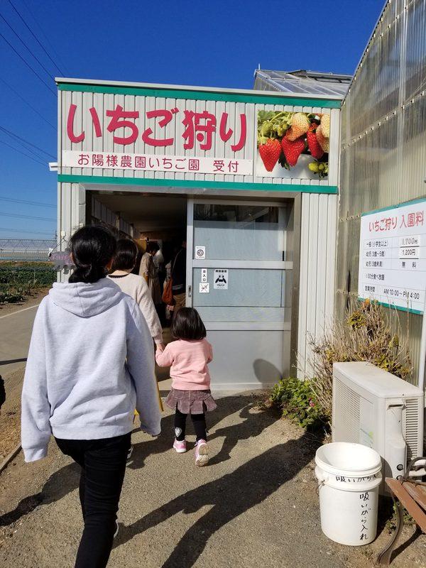 田原イチゴ狩り&恋路ヶ浜からの・・